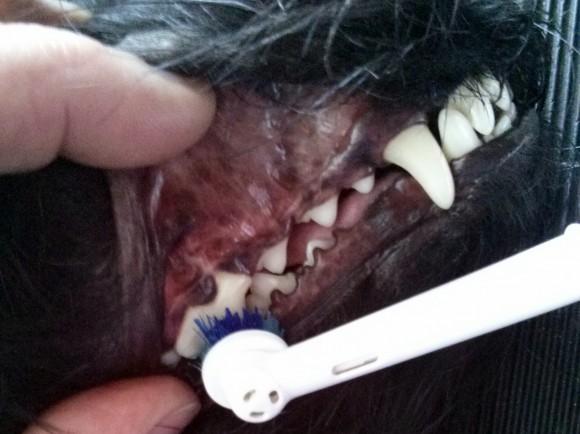 Zahnbürsteneinsatz